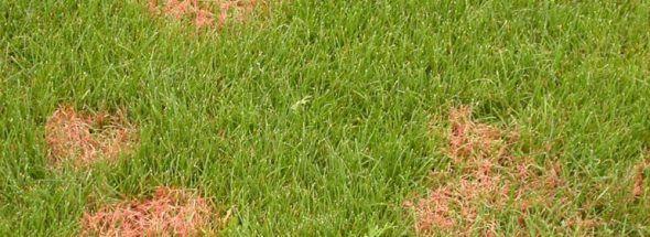 bruine vlekken in het gras