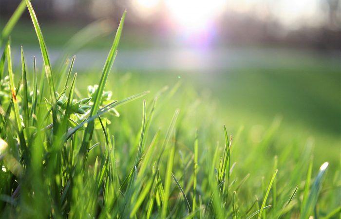 gezond gras